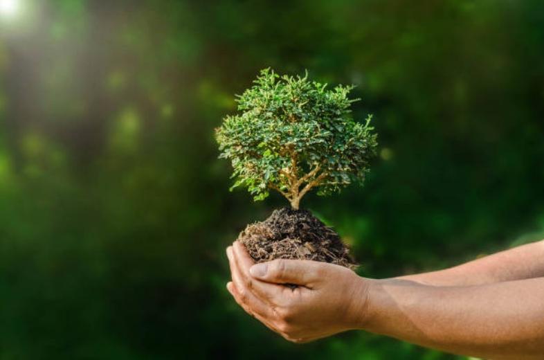 Картинки по запросу земельний податок на лісові землі